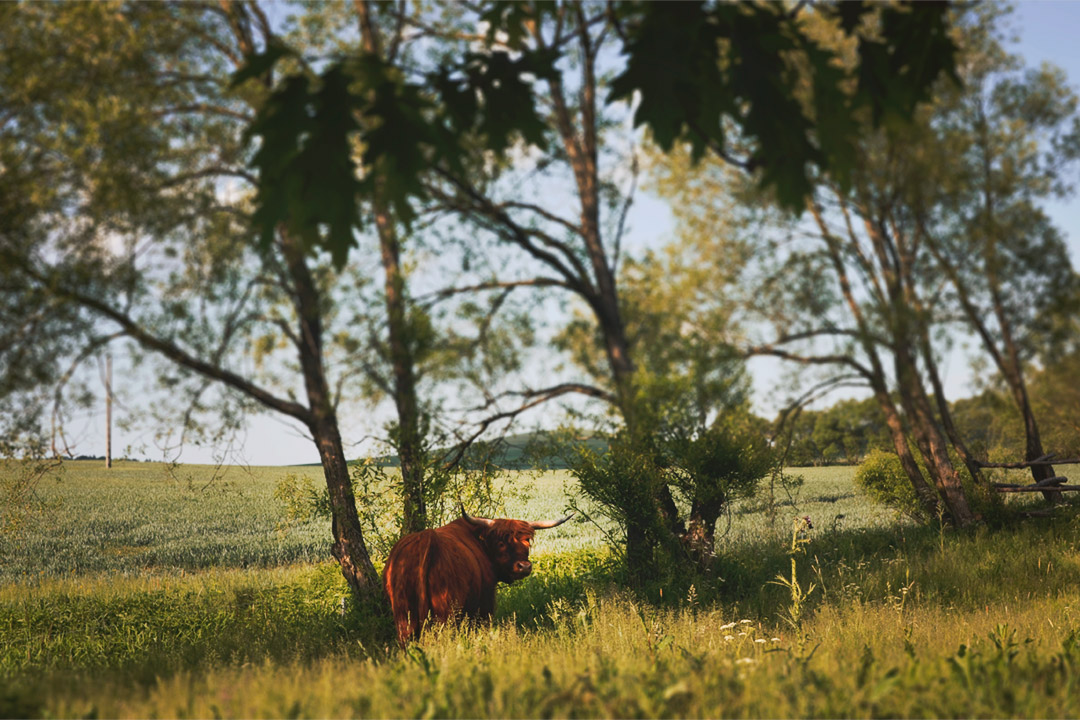 Wiosna w gospodarstwie agroturystycznym Pustelnik